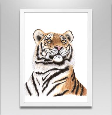Взгляд тигра - Постеры, лицо, Популярные