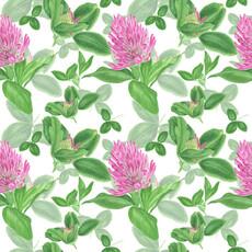 Розовый клевер на белом фоне - клевер - Коллекции